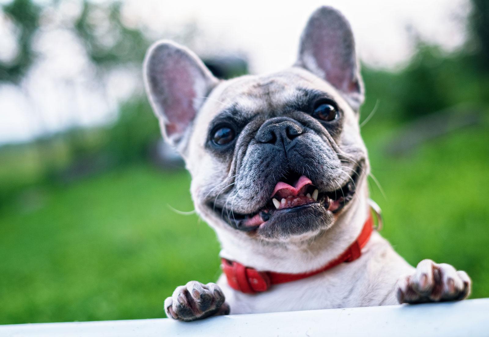 Na kaj moram misliti pri učenju psa? (1min branja)