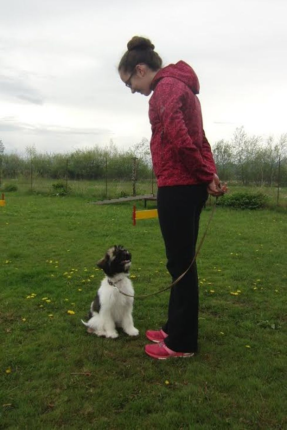 Pasja šola Švrk - pozornost psa