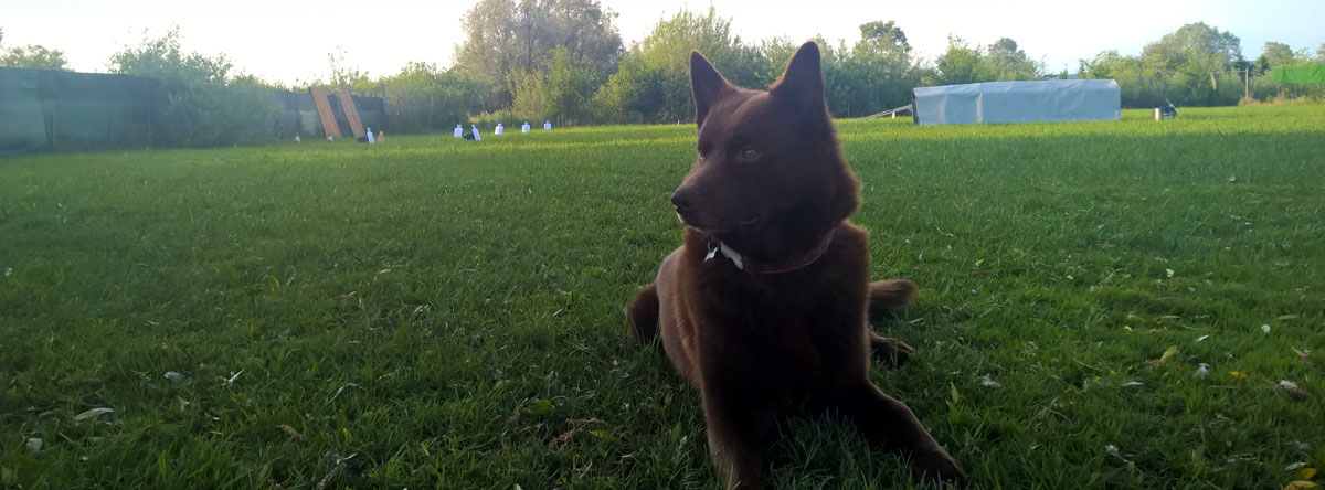Učenec pasje šole Švrk – ARI
