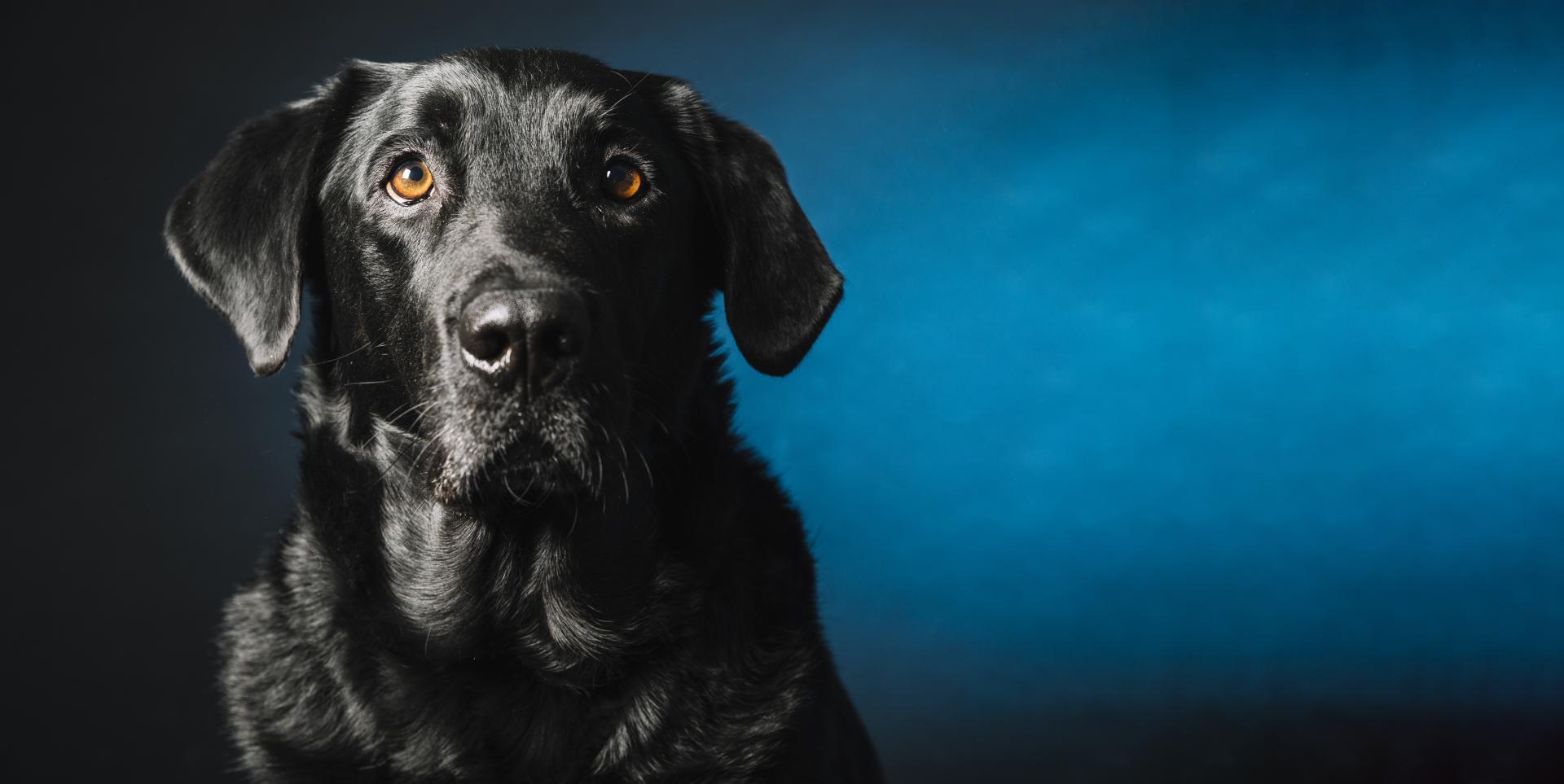Zakaj posvojiti starejšega psa? (2min branja)