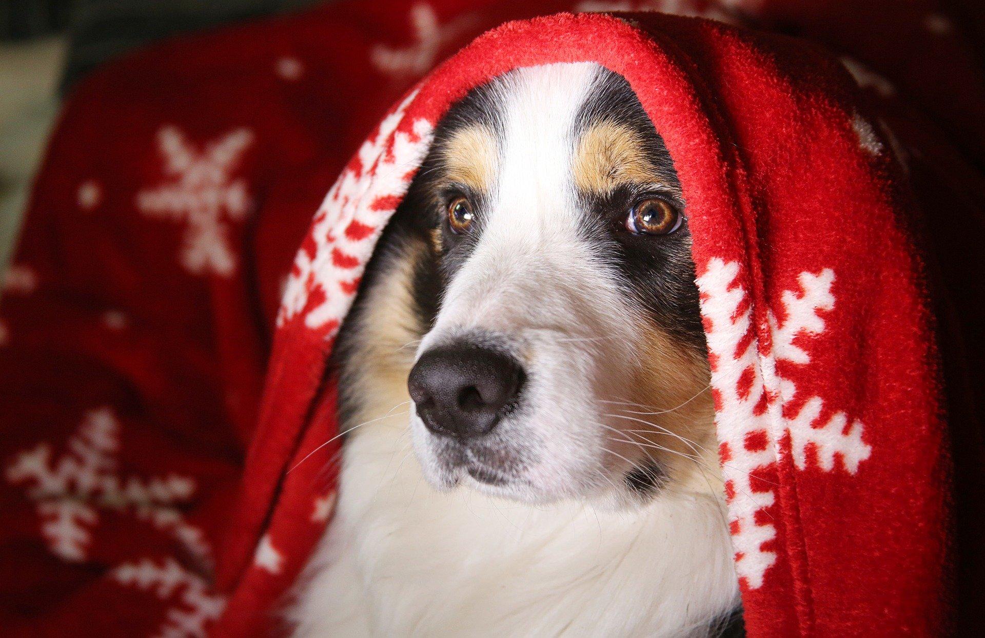 Veseli december – naj ga ne pokvari pirotehnika (6min branja)